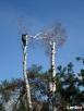 Wycinka drzew Żyrardów i okolice
