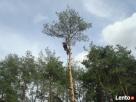 Wycinanie ścinanie obcinanie drzew Ostrów Kalisz Plesze