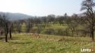 Sprzedam działke rolno-budowlaną w Okocimiu Brzesko