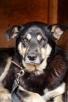 Daktyl nieśmiały pies - 3