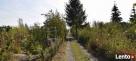 Ogródki działkowe bez płacenia odstępnego Miłkowice