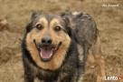Donat - Uśmiechnięty psiak prosi o domek Luzino