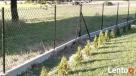 Siatka ogrodzenia 60x60x3,6mm h-150cm kolor zielony,czarny - 7