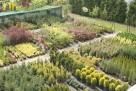 Największy wybór roślin, zakładanie i pielęgnacja ogrodów - 3