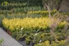 Największy wybór roślin, zakładanie i pielęgnacja ogrodów - 4