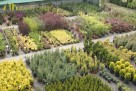 Największy wybór roślin, zakładanie i pielęgnacja ogrodów - 1