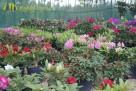 Największy wybór roślin, zakładanie i pielęgnacja ogrodów - 2