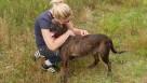Dostojny psiak w typie teriera szuka opiekuna - 7