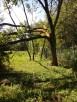 Trawniki, Ogrody odnawianie Solidnie