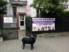 Lilo psi fryzjer - salon przy ul. Jórskiego 22 zaprasza