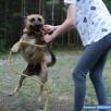 Dżeki adoptuj psa Fundacja