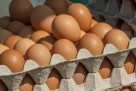 Sprzedam jaja kurze. Każda ilość