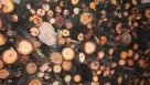 Drewno / Drzewo owocowe do wędzenia 30kg za 17zł - 2