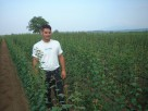 Production of fruit seedlings of grape seedlings
