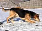 RAPUŚ-bardzo przyjazny,mądry,wesoły,energiczny pies szukaDOM - 5
