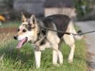 RAPUŚ-bardzo przyjazny,mądry,wesoły,energiczny pies szukaDOM - 7