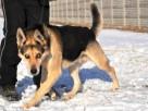 RAPUŚ-bardzo przyjazny,mądry,wesoły,energiczny pies szukaDOM - 6