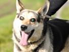 RAPUŚ-bardzo przyjazny,mądry,wesoły,energiczny pies szukaDOM - 8