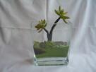 Kaktus w szklanym wazonie