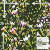 Materiał z nadrukiem: Pnące kwiaty wśród liści - seria 1