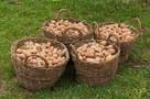 Ukraina. Ziemniaki 0,25 zl/kg, siano 70 zl/tona.Gospodarstwo