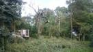 Przycinanie drzew Mosina, Puszczykowo , Wiry , Łęczyca