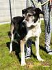 FREDIE-bardzo miły psi staruszek-kochany, grzeczny, przyjazn - 2