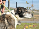 FREDIE-bardzo miły psi staruszek-kochany, grzeczny, przyjazn - 4