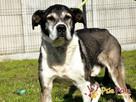 FREDIE-bardzo miły psi staruszek-kochany, grzeczny, przyjazn - 5