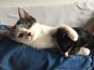 Kociaki szukają kochających domów