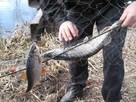 siatka na ryby wonton