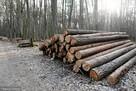 Wycinka Skup lasu na Pniu Sosna Świerk Brzoza Olcha Całe Pod - 1