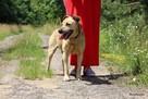 Stateczny starszy psiak szuka domu - 2