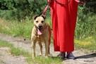 Stateczny starszy psiak szuka domu - 1