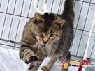 FERRUŚ-Bardzo pokiereszowany kotek szuka dobrego domu, adop