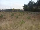 Działkę rolną sprzedam Sadowne