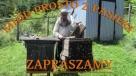 Sprzedaż miodu spadziowego prosto z pasieki w Juszczynie Radziechowy-Wieprz