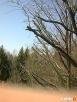 Pielęgnacja drzew, prześwietlanie koron, usuwanie posuszu Lublin