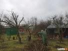 Pielęgnacja drzew, prześwietlanie koron, usuwanie posuszu - 2