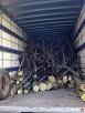 Pielęgnacja drzew, prześwietlanie koron, usuwanie posuszu - 3