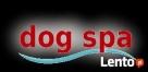 Strzyżenie psów DOG-SPA Rzeszów-Słocina Rzeszów
