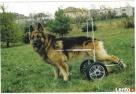 wózek dla psa Wrocław