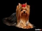 Salon Pielęgnacji psów i kotów HauMiał - 4