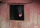 Pomóż psiemu seniorkowi zamienić budę na ciepły kocyk Katowice