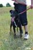 Pokochaj starszego psa - okaż serce! - 6
