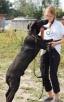 NEPTUN, pies dla aktywnych, ciągle w schronisku - 3