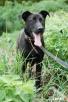 NEPTUN, pies dla aktywnych, ciągle w schronisku Skierniewice
