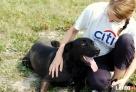 NEPTUN, pies dla aktywnych, ciągle w schronisku - 4