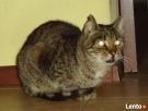 kotek DZIADEK juz tak długo czeka na dom Bełchatów