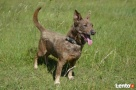 Bojas - starszy psiak szuka miłości i ciepłego kąta Luzino